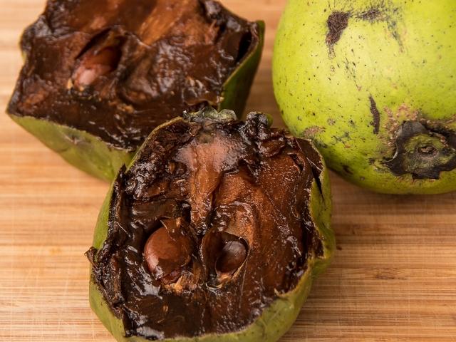 Frucht schwarze Sapote
